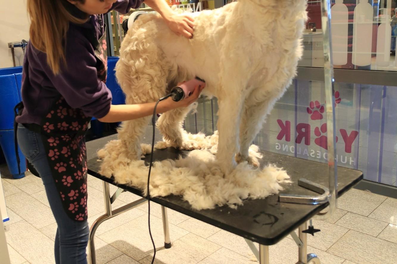 Hundeklipp – York Hundesalong